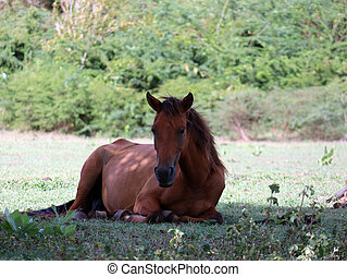 Wild horse relaxes in the shade - A wild horse takes refuge...