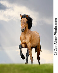 wild horse runs