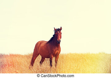 Wild horse standing in the field, vintage color stylized ...