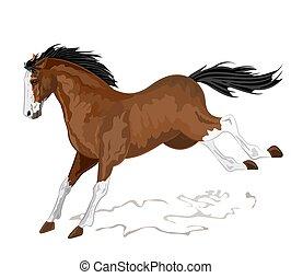 Wild horse vector illustration