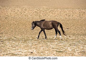 Wild horses at Himalaya mountains . India, Ladakh