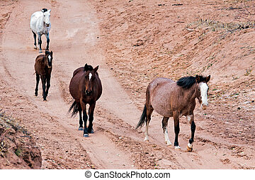 Wild horses Canyon de Chelly