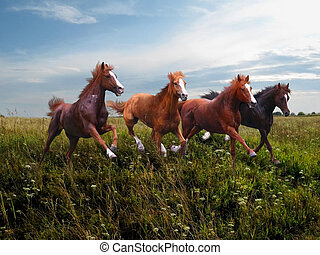 Wild horses gallop along the grass - Rapid running of free...