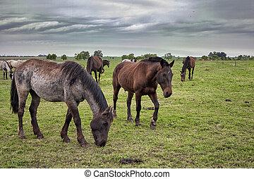 Wild horses graze in the sunlit meadow