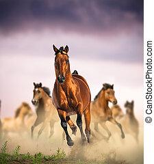 wild horses group running