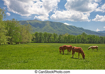 Wild horses grazing in the valley in the mountains