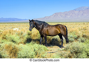 wild horses in the prarie in the old abandonned small...