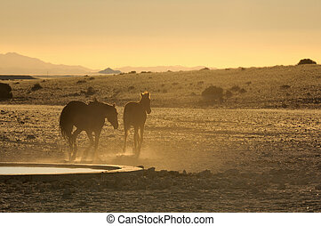 Wild horses of the Namib at sunset
