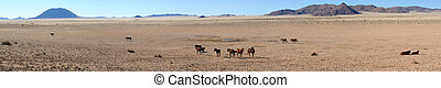 Wild horses of the namib panorama