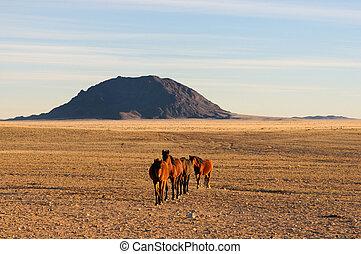 Wild horses of the Namib
