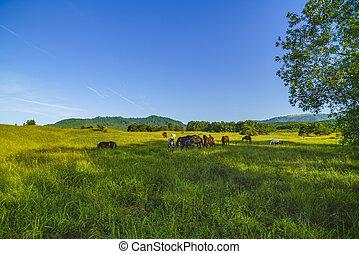 Wild horses on a meadow in the mountains of Fagarasi, Romania