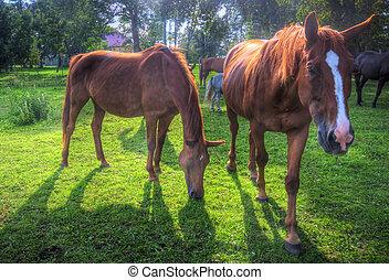 Wild horses on the field