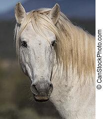 Wild Horses Stallion - Handsome Wild Stallion posing for the...