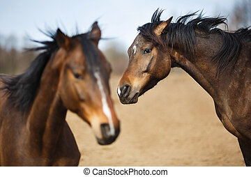 Wild horses on the meadow at spring time