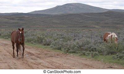 Wild Horses Wyoming - Beautiful Wild Horses - Wyoming...