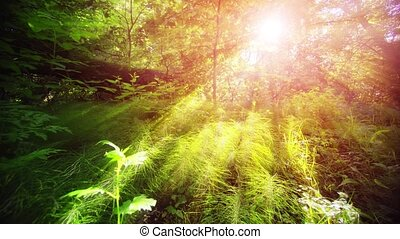 Sunshine filters through branches of trees to illuminate horsetail plants on the forest floor in this Russian wilderness area, with nature sounds.