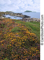 wild irish flowers and scarriff islands coastal view -...