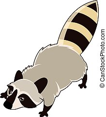 Wild isometric Raccoon - Vector image of a wild isometric...