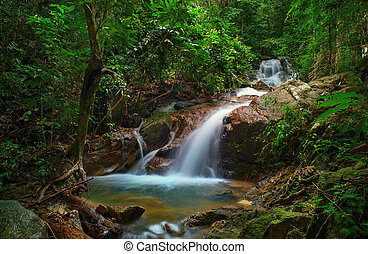 Wild jungle forest and scenery wate