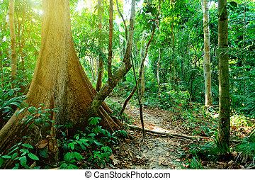 wild jungles