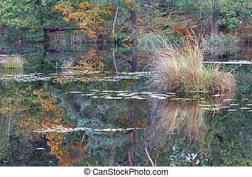wild lake in autumn season - wild forest lake in autumn ...