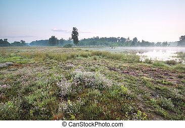 wild lake in misty morning