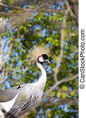 Wild life bird - Picture of a wild life bird, nice colors...