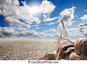 Wild life  - Desert landscape with a pelican on a rock