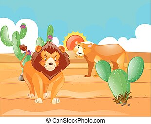 Wild lions in the desert