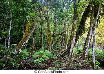 wild, maya, dschungel, in, der, nationalpark, semuc, champey, guatemala