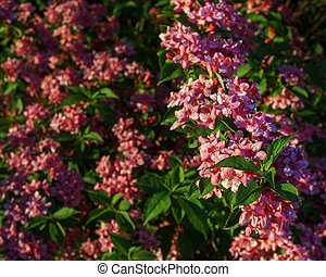 wild meadow bush of pink flowers in the forest.