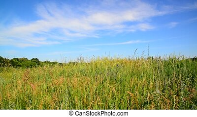 Wild meadow of Central Russia in July - wild meadow of...