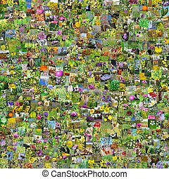 Wild medicinal plants of Siberia. A collage of photos