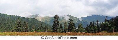 Wild mixed forest background