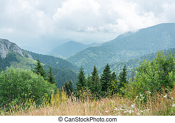 Wild Mountain Garden