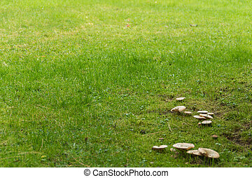 Wild mushrooms in a meadow
