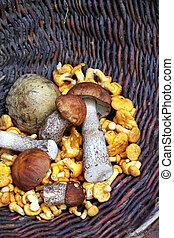 Wild mushrooms in a wicker basket