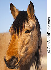Wild Mustang Horse in the Nevada desert.