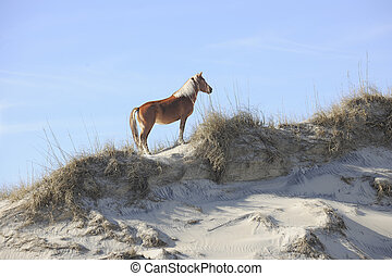 A beautiful wild mustang standing regally atop a North Carolina sand dune.