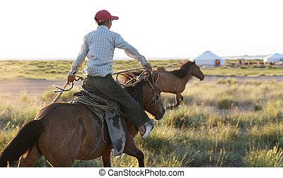 Wild Mustang roundup