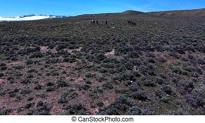 Wild Mustangs Horse Wyoming aerial - Wild Mustangs Horses...