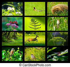 composition twelve photos green patterned background with lines