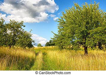 Wild nature, landscape