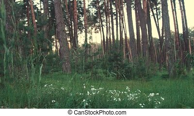 Wild Nature of Forest - Daytime shot of white flowers and...