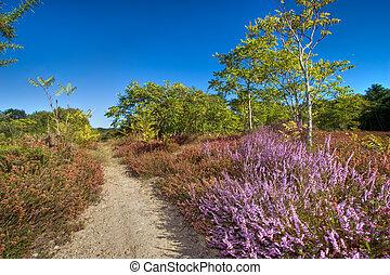 wild nature path