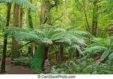 rain forest, Victoria, Australia - Wild nature: rain forest,...