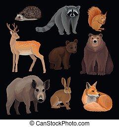 Wild northern forest animals set, hedgehog, raccoon, squirrel, deer, fox, bear cub, wild boar, hare vector Illustrations on a black background