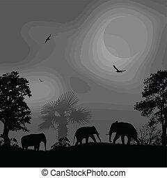 wild, ondergaande zon , olifanten