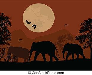 wild, op, ondergaande zon , rood, olifanten