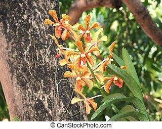 wild orchid flower in garden